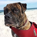 Milo from Ocean Gate