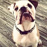 Otis from Asbury Park
